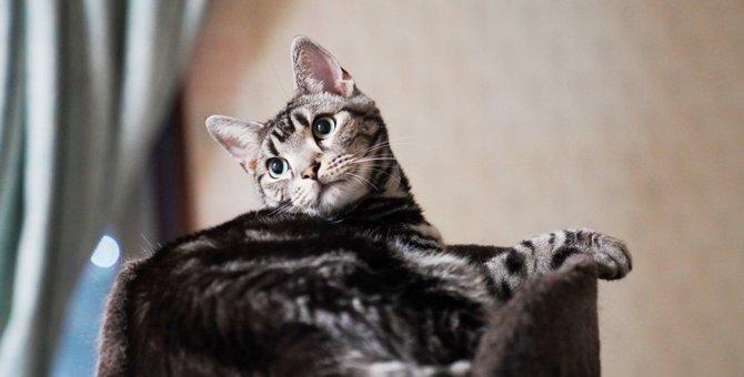 Laylaの12猫占い【1/27~2/2】のあなたと猫ちゃんの運勢