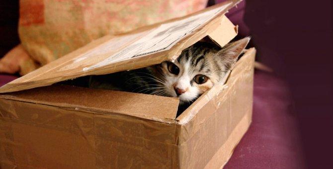 猫は狭い所が大好き!特に入りたくなる7つの隙間