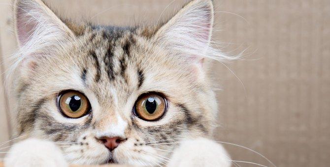 猫が甘える時に噛む4つの理由
