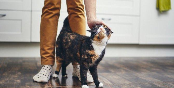 猫が自分のモノ!とスリスリしがちな7つの物