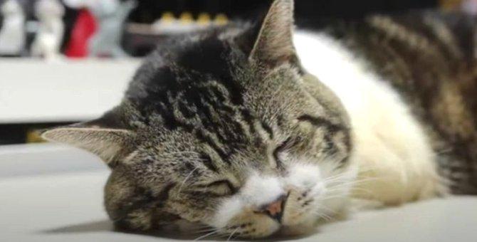 爆睡中にガクッ!猫ちゃんの美味しい夢♡