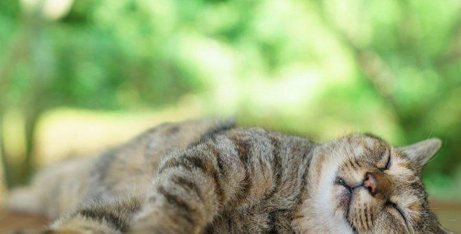 猫にエアコンを使う時の設定温度や使い始めの時期