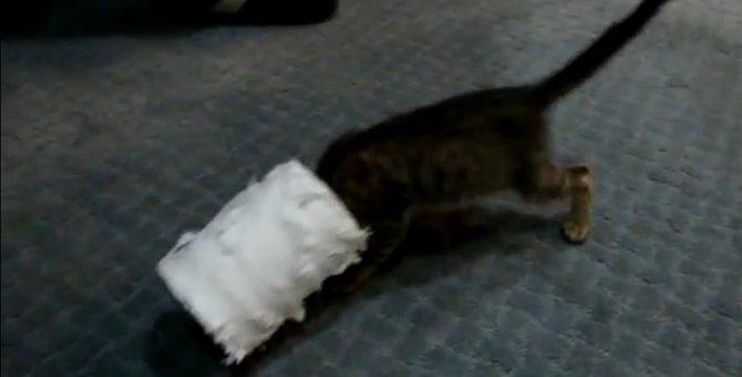 猫の頭にトイレットペーパーがすっぽり!飼い主さんも大爆笑です