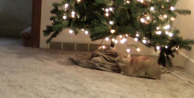 猫とクリスマスツリーの1日