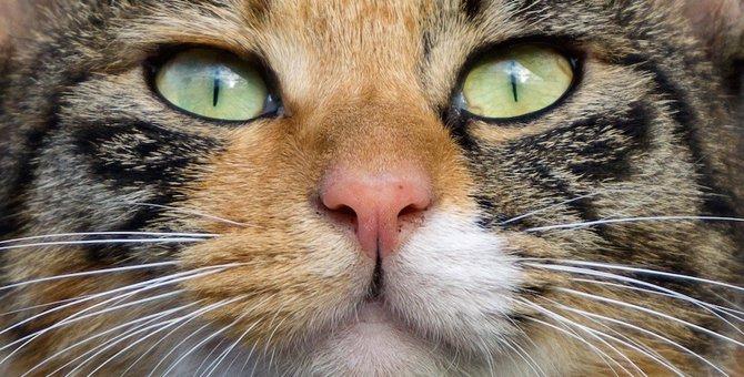 猫にもシミはできる?原因や改善させる方法とは…