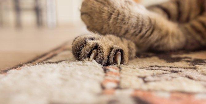 猫が手をクロスさせているのはどんな時?3つの心理