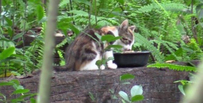 野良猫のコロニーに捨てられた子猫…永遠の家族と幸せに♡
