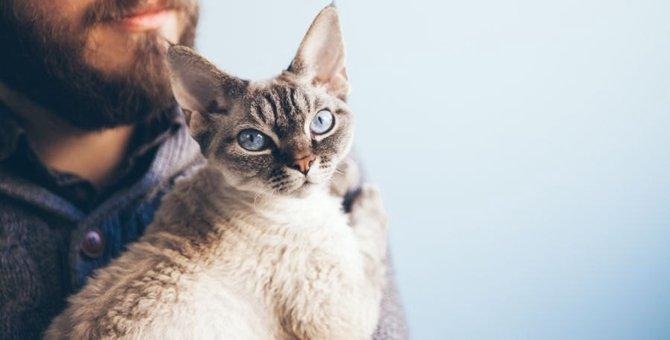 猫を『苦しめる』飼い主の行動4つ