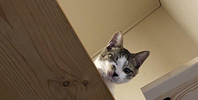 『控えめな猫』の特徴3つ!気持ちを察してあげるコツとは?