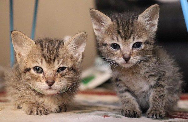 猫が『サイレントニャー』をする時の意味4つ