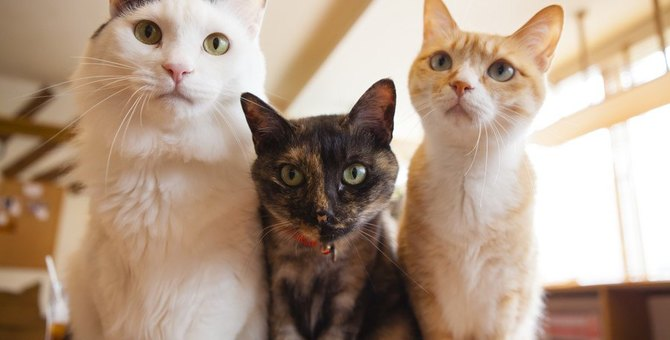 猫を飼うなら1頭?多頭?それぞれのメリット・デメリットを解説!