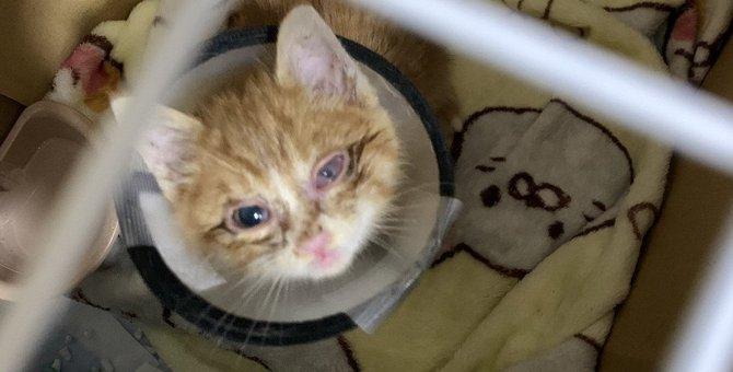 儚く尊い命!酷い猫風邪の子猫が愛で満たされ回復した姿に涙腺崩壊!