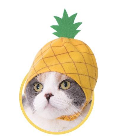 猫のフルーツのかぶりものが帰ってきた!「かわいい かわいい ねこフルーツちゃん2 」が登場!