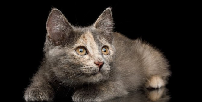 猫に『不安感』を抱かせる行動5選!飼い主が注意すべき振る舞いとは?