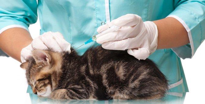 猫のワクチンの値段と種類、予防できる病気や注意点とは