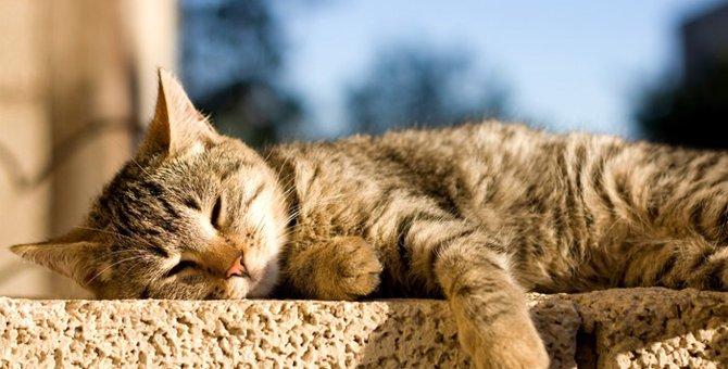 猫が日向ぼっこをする理由とその効果