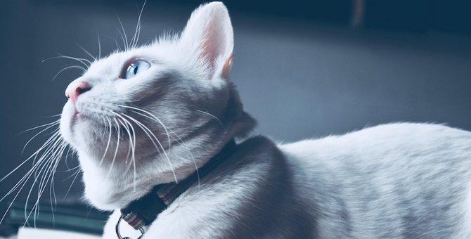 フェレンデルシュターデン現象って何?猫が不気味な行動を取る3つの理由
