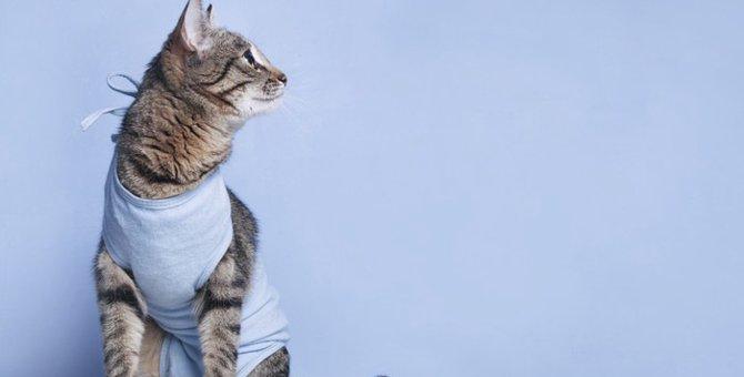 猫に術後服は必要?使い方や作り方おすすめ商品まで