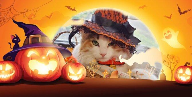 LAYLAの12猫占い【10/26~11/1】のあなたと猫ちゃんの運勢
