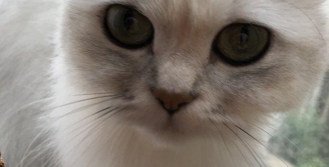 再発しやすいストルバイト結石!愛猫に合った適切な治療を見つけよう