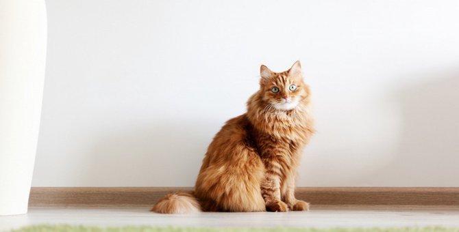コロナウイルスパンデミック中は猫・犬にも社会的隔離を!