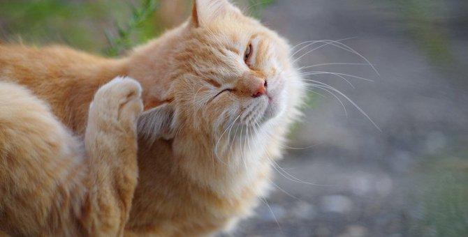 猫が身体を掻き続ける原因と疑われる病気4つ