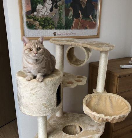 猫に安全なキャットタワーの高さはどのくらい?