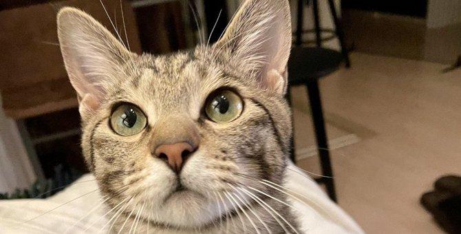 猫が『上目遣い』をしてくる理由3選