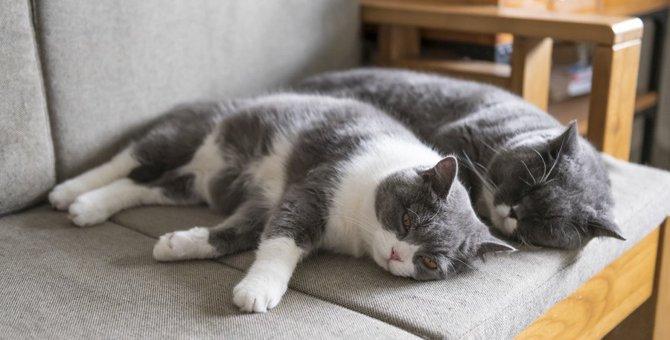 仲良しな猫同士が『喧嘩』を始めてしまう要因3つ