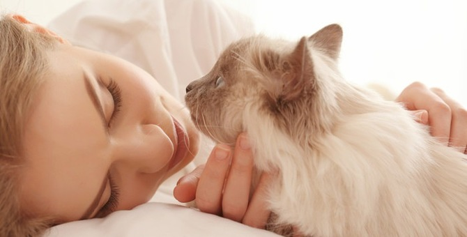 猫の夏バテの兆候と対策について