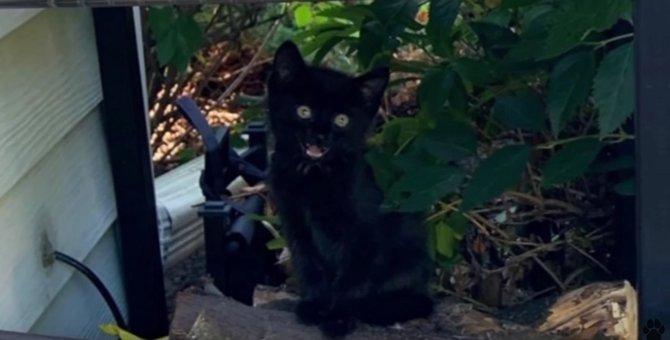 庭に現れた小さな黒猫…家主の愛情を受けて幸せに♡