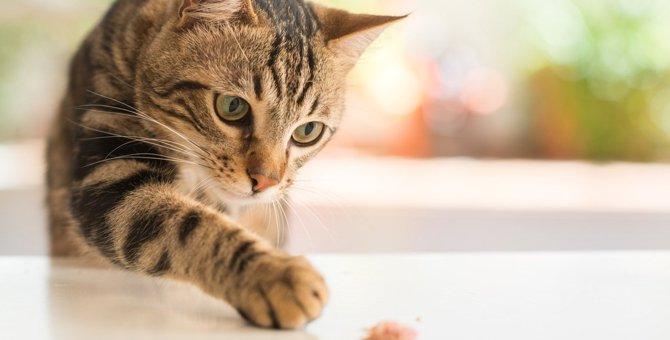 猫の『盗み食い』で起こる危険なトラブル3つと予防策