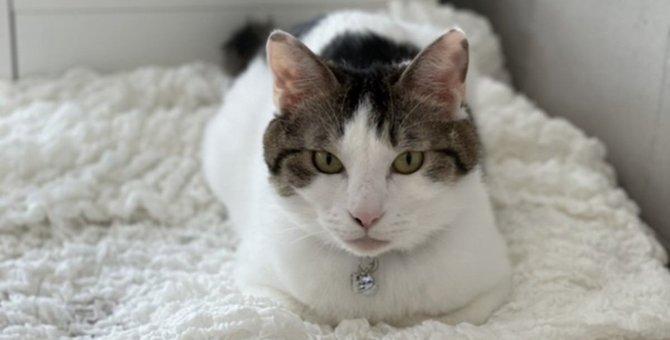 やんちゃな保護猫に大慌て…新生活を軌道に乗せたアイデアとは?