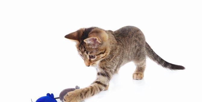 自動で動く猫のおもちゃ 人気ランキングTOP5