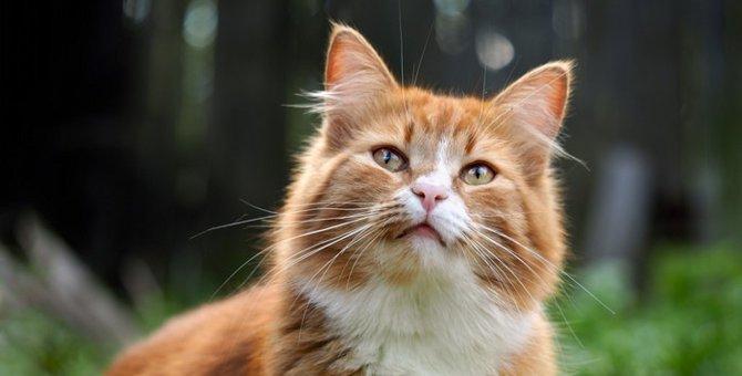 猫が蜂に刺されたときの対処法