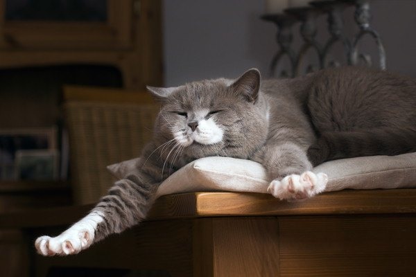 猫の暮らしはどう?羨ましい7つの暮らし方