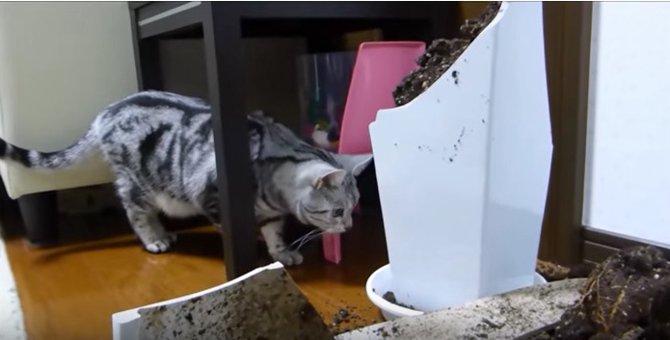 「やっちまったニャ・・・」花瓶を割ってしまった猫が可愛い♡