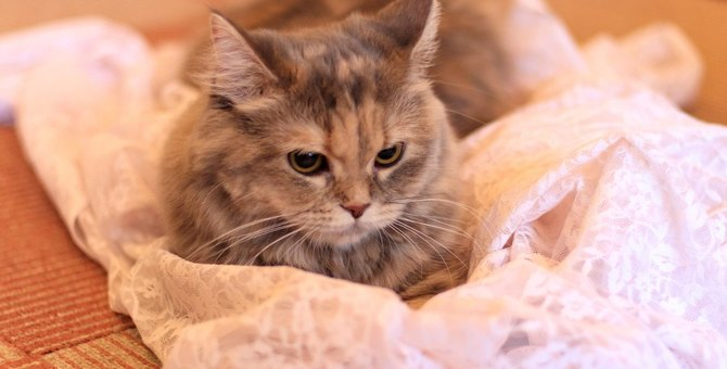 猫が飼い主に『クレーム』をつけたい時の行動3つ