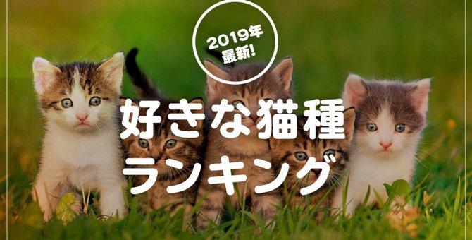 【アンケート結果発表!】好きな猫種と飼っている猫種にはこんな差が!