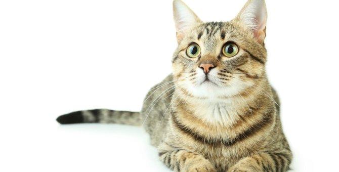 猫の知能を知ろう!人間や犬と比較
