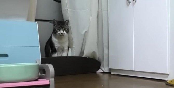 ハプニング発生でテンション駄々下がりな猫ちゃん