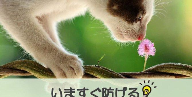 【異物誤飲はいつおこる?】いますぐ防げる猫の「異物誤飲」(獣医師監修)