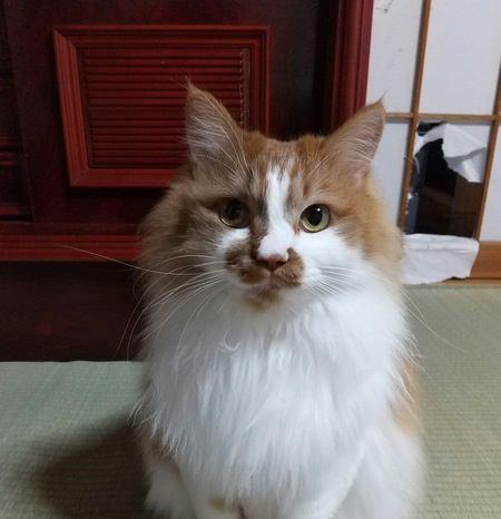 野良猫を保護するとき「覚悟」するべきこと3つ