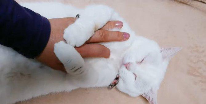 ヘソ天する猫さんをもふもふしてみた!すると…