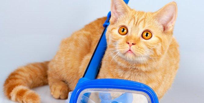 海を泳ぐ猫達9選!泳げるようになった理由