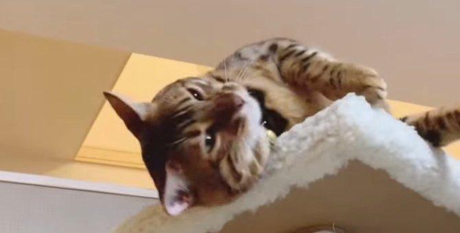 スリスリ!甘えたタイムの猫さん