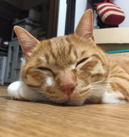 猫に腕枕♡猫と仲良く寝る方法4選