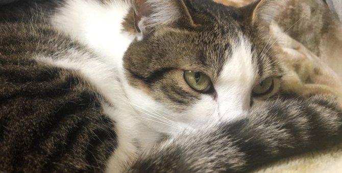 猫が『撫でないで!』と訴えているときに見せる仕草5つ