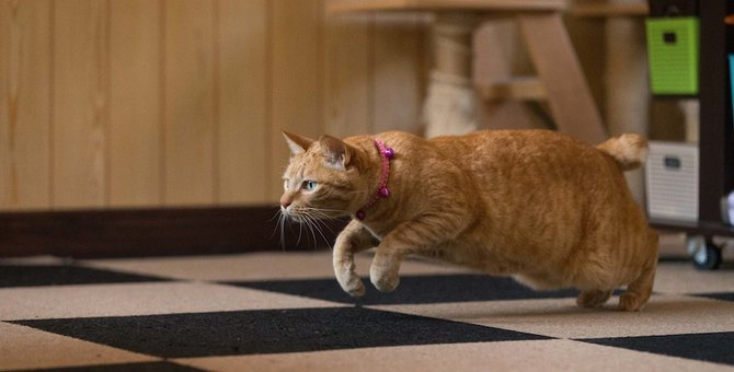 超特急!猫が突然猛ダッシュで走る6つの理由