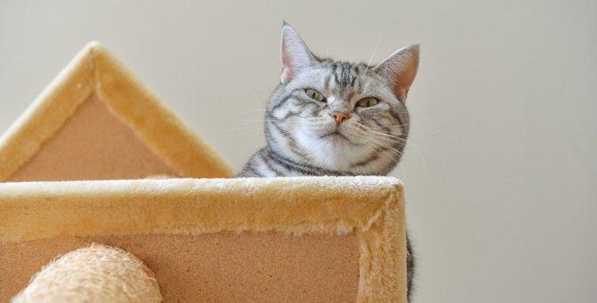 猫の『キャットタワーを絶対設置しちゃダメな場所』3つ